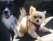 5-ways-to-look-after-your-dogs-in-the-heat-